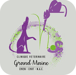 CLINIQUE VETERINAIRE GRAND MAINE